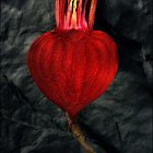 Heart Shaped Beetroot  - Studio Photography © David Cantwell Photography