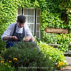 Chef Picking Herbs @ Summer  - Seasonal Commercial Photography © David Cantwell Photography