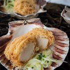 Scallops in a Shell - Seafood Food Photography © David Cantwell Photography